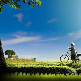 otw sawah by Herry Vaeezal - Landscapes Prairies, Meadows & Fields ( work, field, sky, blue, grass, green, women, bicycle,  )