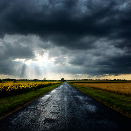 Hungarian skies CLXXIV. by Zsolt Zsigmond - Transportation Roads ( stormy, clouds, soad, sky, sunflowers, dark, sunrays )