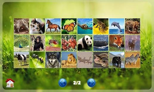 Belajar Membaca Binatang- screenshot thumbnail
