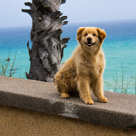 Dog with sunset view point background by Max Liew - Animals - Dogs Portraits ( homeless, dog portrait, stray dogs, sea background, dog,  )