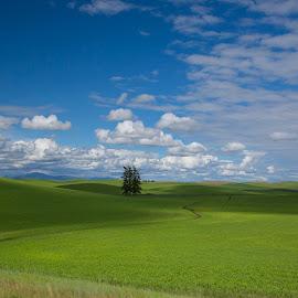 Farmland in the Palouse Hills by Lynn Kohut - Landscapes Prairies, Meadows & Fields ( field, washington, palouse, farmland, summertime, landscapes,  )