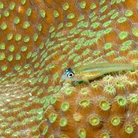 by Erin Schwartzkopf - Animals Fish ( tiny fish, coral fish, fish, tropical fish, ocean fish )