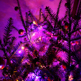 Lighting up the tree  by Pap István - Abstract Light Painting (  )