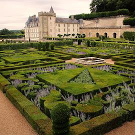Chateau de Villandry - Le jardin des lavandes by Gérard CHATENET - Buildings & Architecture Public & Historical