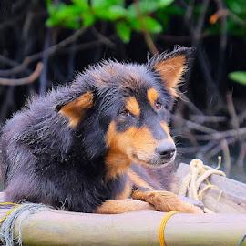 dog in rain by Donna Racheal - Animals - Dogs Portraits ( rain, wet dog, street dog, raining, dog,  )