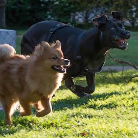 In action by Macinca Bogdan - Animals - Dogs Running