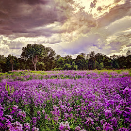 Flower Pasture by Derrill Grabenstein - Landscapes Prairies, Meadows & Fields