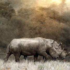 Deuce by Bjørn Borge-Lunde - Digital Art Animals ( wild animal, animals, wilderness, nature, wildlife, africa, rhino )