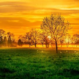 Evening dreams by Linda Brueckmann - Landscapes Prairies, Meadows & Fields