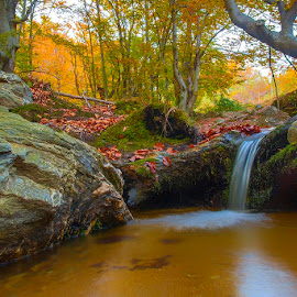Water in the forest by Costin Mugurel - Landscapes Forests ( water, mountains, nature, autumn, forest, river )