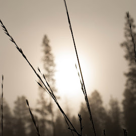 Morning Light and Fantastic Fog by Jodie Lindbo - Nature Up Close Leaves & Grasses ( oregon, fog, grass, dew, lapine )