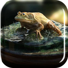 Frog Amazing Graphics LiveWP