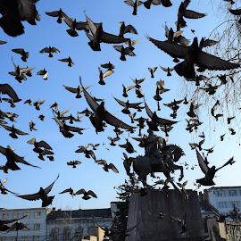 Urban flight... by Marton Rakhel - City,  Street & Park  Street Scenes ( pigeons, fly, urban_life, walk, sun, city )