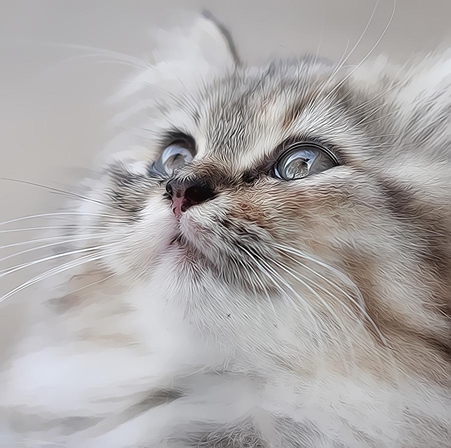 Oggy by Eli Supriyatno - Animals - Cats Portraits ( cutest cats )