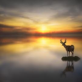Serenity by Jennifer Woodward - Digital Art Animals ( animals, dawn, sunset, silhouette, reflections, wildlife, sunrise, dusk, deer )