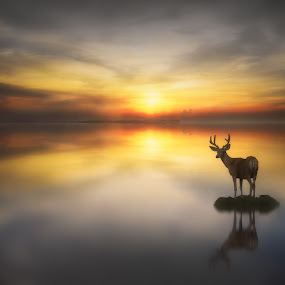 Serenity by Jennifer Woodward - Digital Art Animals ( animals, dawn, sunset, silhouette, reflections, wildlife, sunrise, dusk, deer )