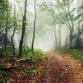 20170916-DSC_1727 by Zsolt Zsigmond - Landscapes Forests ( nature, tree, fog, forest, mist )