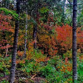 Autumn Colours  by Debbie Squier-Bernst - Landscapes Forests