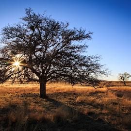 San Rafael Valley by Gannon McGhee - Landscapes Prairies, Meadows & Fields ( rafael, san, tree, arizona, sunrays, valley, prairie, sun )