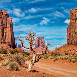 Twisted Tree by Gary Mynar - Landscapes Deserts ( monument valley, mountains, other, desert, utah )