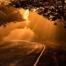 Morning Raga by Ankur Mistry - Landscapes Travel ( winter, travelling, tree, travel, road, gold, sunrise, morning, golden, golden hour )