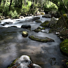 Alder Forest and river by Cristobal Garciaferro Rubio - Nature Up Close Trees & Bushes