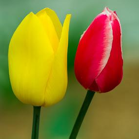 by Samer Shaur - Nature Up Close Flowers - 2011-2013