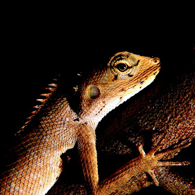 by Kay Eimza - Animals Reptiles
