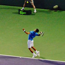 Novak Djokovic - Miami Open by Marcello Toldi - Sports & Fitness Tennis