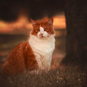 Autumn by Annamarie Dearr - Animals - Cats Portraits ( cats, orange, animals, cat, nature, autumn, pet, beautiful, fall, pets, beauty, pretty, portrait, eyes, animal,  )