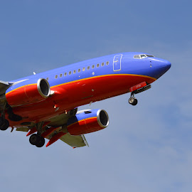 Hold On!!! by Corinne Hall - Transportation Airplanes