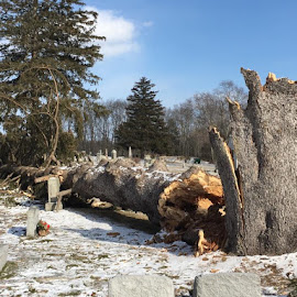 Tree Falls in Cemetary by Kristine Nicholas - Novices Only Landscapes ( winter, nature, graves, snow, trees, grave, landscape, decay, graveyard,  )