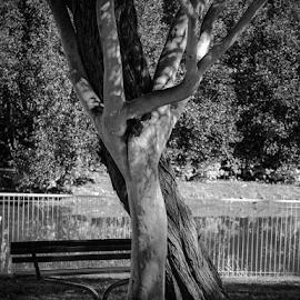 by Cornel Robinson - City,  Street & Park  City Parks ( bench )
