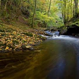 by Siniša Almaši - Nature Up Close Water ( water, up close, stream, waterscape, forest, yellow, landscape, leaves, colours, nature, autumn, cascade, trees, stones, rocks, river )