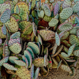 Cactus by Barbara Brock - Nature Up Close Other plants ( dry plants, colorful cactus, prickly plants, cactus )