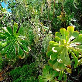 SUCCULENTS by Wojtylak Maria - City,  Street & Park  City Parks ( green, nature, plants, garden, succulents,  )