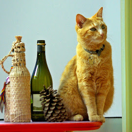 Ginger bottle by Ciprian Apetrei - Animals - Cats Portraits ( cat, brittany, fun, bottles, ginger cat )