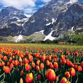 by Łukasz Rogalski - Landscapes Mountains & Hills