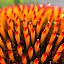 by Heidi George - Flowers Single Flower