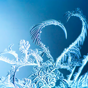 Frosty Love by Evan Ludes - Nature Up Close Water ( winter, icy, blue, ice, frost, crystal, frosty )