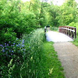 Flowers and Bridge in Galena Park by Kathy Rose Willis - City,  Street & Park  City Parks ( galena, illinois, trail, trees, weeds, bridge, flowers, spring,  )