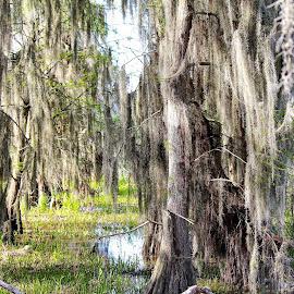 by Regina Aderholdt - Landscapes Forests