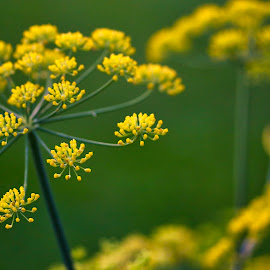 plants by Rs Photography - Nature Up Close Other plants ( wallpaper, wallpapers )