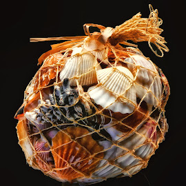 Hanging Bag Of Shells by Dave Walters - Artistic Objects Still Life ( sea shells, mystical, nature, colors, lumix fz2500,  )