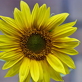 by Bruce Newman - Flowers Single Flower ( nature, single flower, coloful, dramatic,  )