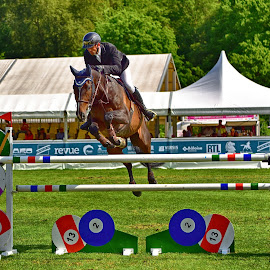 The Billiard Jump by Marco Bertamé - Sports & Fitness Other Sports ( bowl, jumping, billiard, beown, green, horse, international, niumber, roeser, 13, equestrian, luxembourg, 12, 2, red, 6, blue, réiser päerdsdeeg, csi jumping )