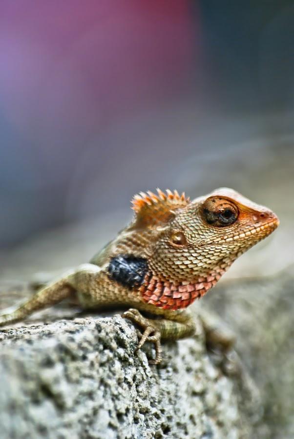 Garden Lizard by Dhanya Us - Animals Reptiles