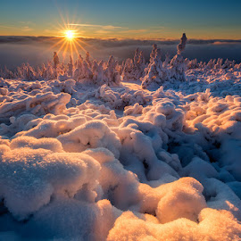 Gold Winter by Pawel Uchorczak - Landscapes Sunsets & Sunrises ( moravia, starbursts, ight, czech, best, poland )
