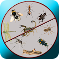 App Insect Killer Prank apk for kindle fire