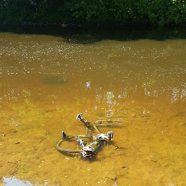 unhappy bike by Petrica Manzala - Transportation Bicycles ( water, old, bike, dirty, river )